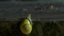 黄色い精霊:リゥ・ウェンヤン